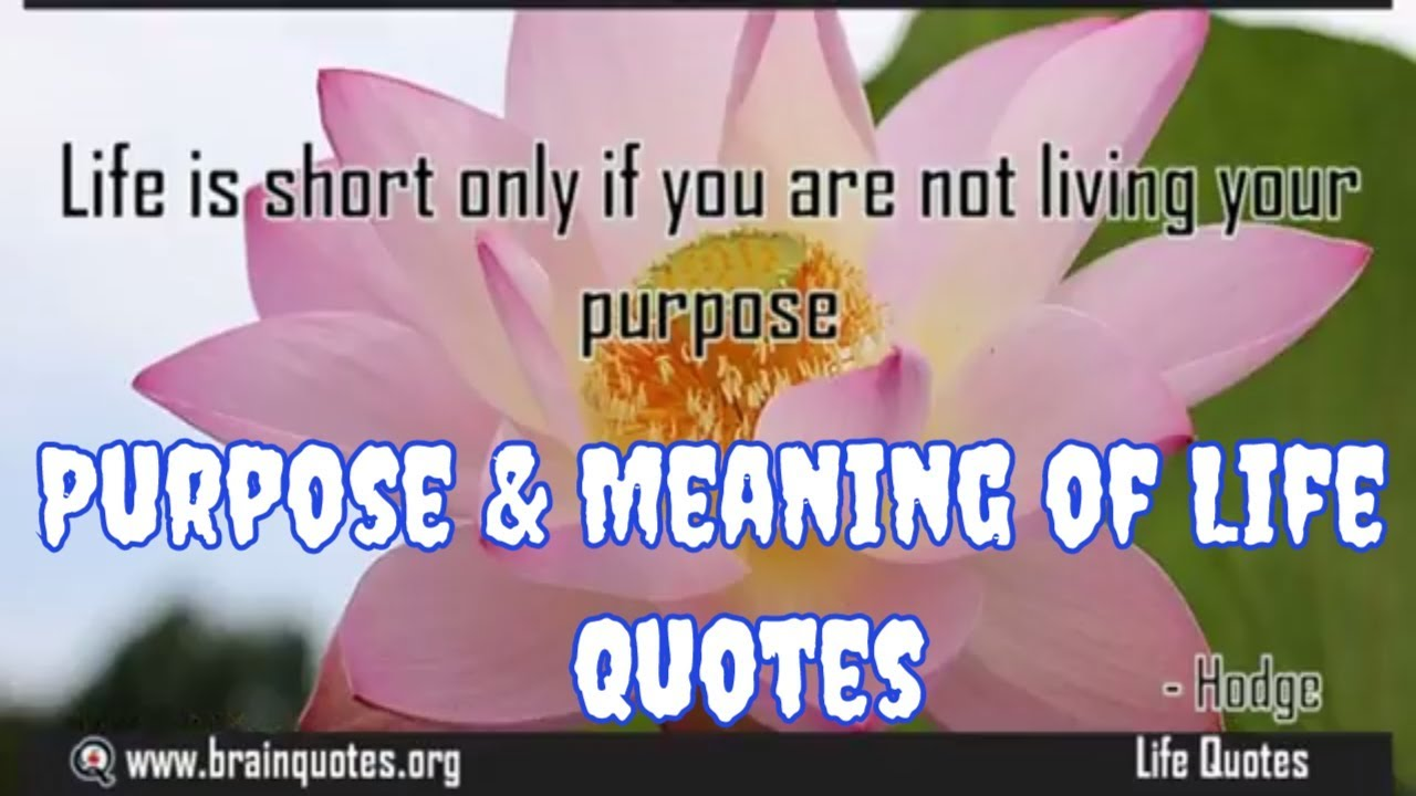 What Is The Purpose And Meaning Of Life Quotes Youtube