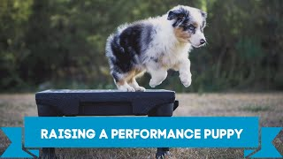 Raising a Performance Puppy    Foundation Puppy Training Tips and Tricks for the Most Obedient Dog