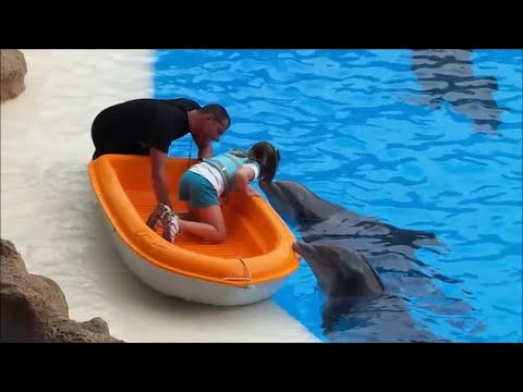 DELFINES at LORO PARQUE THEME PARK COMPLETE DOLPHIN NEW SHOW IN HD 1080