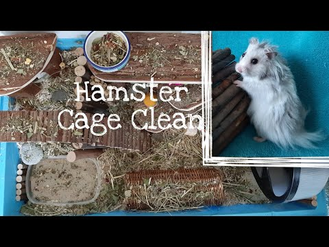 Cleaning My Syrian Hamster's Cage!   Hamster Adventures