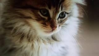 милые картинки про домашних животных