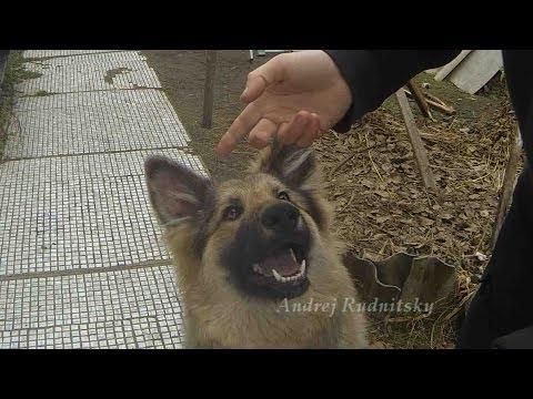 Ремонт собаки :) Если у собаки не стоят уши...