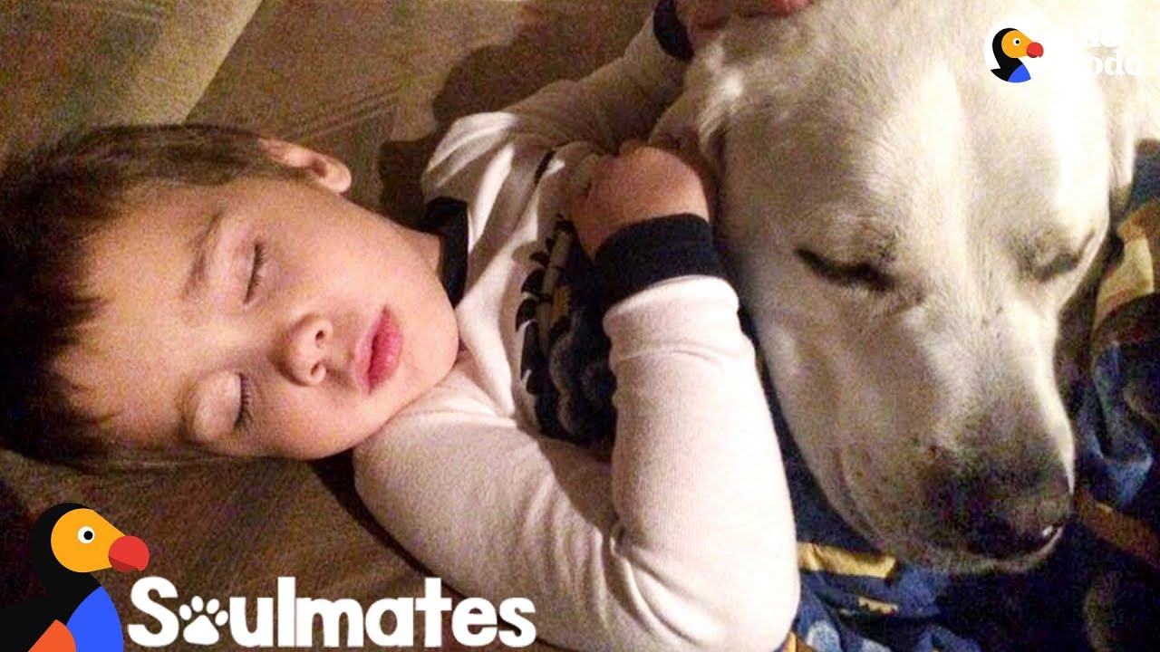 Dog Helps Stop Little Boy From Getting Nightmares