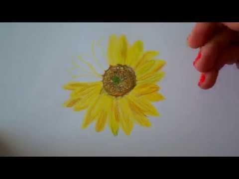 Sonnenblume zeichnen  Schnen Tag  Have a nice Day  How