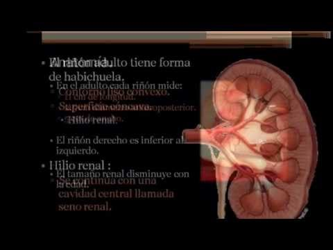 ECOGRAFÍA RENAL - YouTube