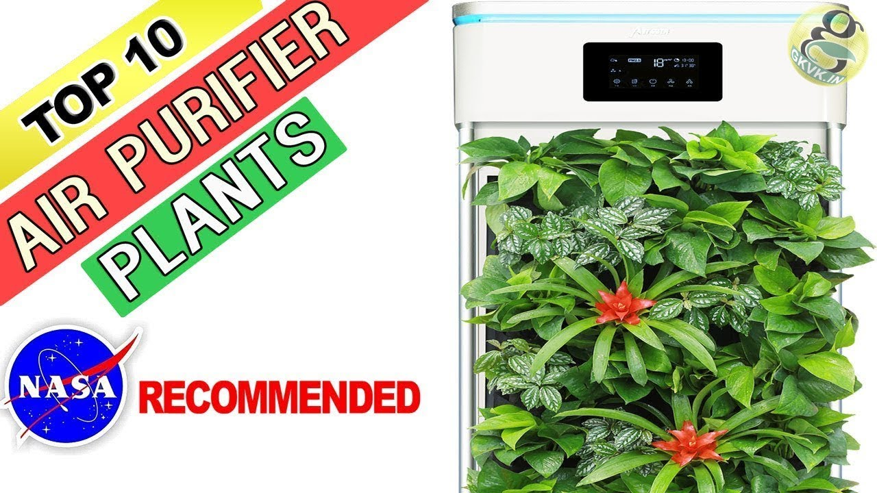 10 Best Air Purifying Plants - NASA Recommended House Plants | Indoor Nasa Best Plants For Home on best mulch for home, best trees for home, best solar system for home, best chairs for home, best pets for home, best fish for home, best dogs for home, best light for home, best flowers for home, best lighting for home, best lucky plant,