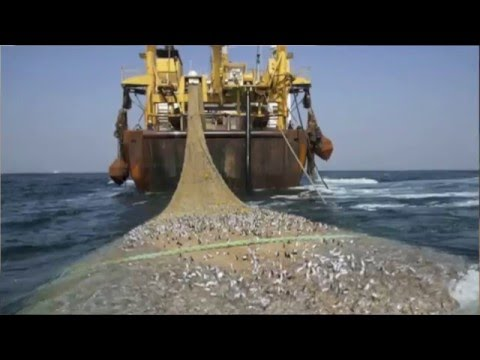 Overfishing and The Tragedy of the Commons