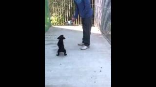 How to start your puppy training Part 1