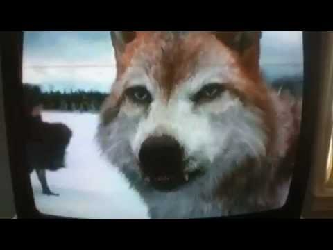 Breaking dawn part 2 wolf dies in battle