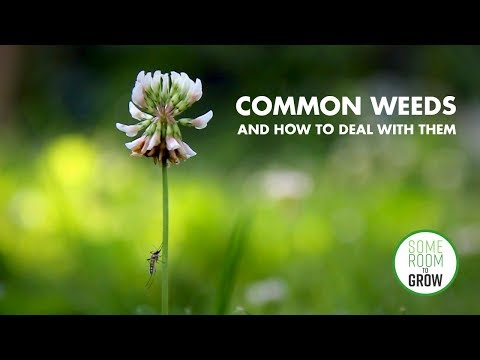 Common Weeds and How to Deal With Them