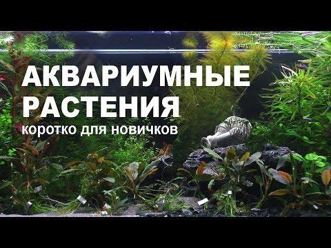 Как посадить траву в аквариум с рыбками