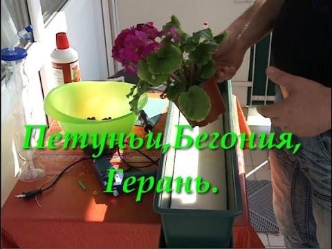 видео: Посадка Цветов без Земли Петуньи,Бегония,Герань