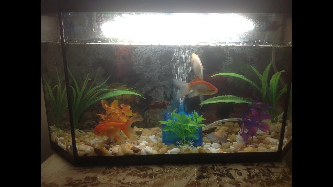 أجمل انواع الأسماك التي يمكن أن تتعايشة مع بعضها