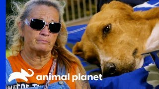 The Team Does Everything They Can To Save This Poor Dog's Life | Pit Bulls & Parolees