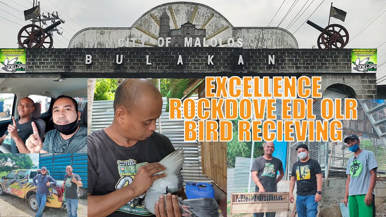 The new Excellence Rockdove and EDL OLR (Bulacan bird recieving)