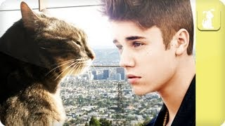 Molly the cat hates Justin Bieber