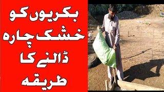 Goat Feed Formula |  goat food management | goat dry food | goat feed in Pakistan | Urdu Hindi