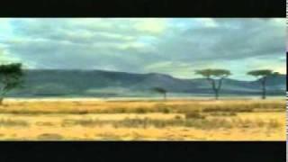 Afryka- zwierzęta