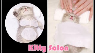 Kitty Salon  Super cute kitten baby cat having SPA treatment full service