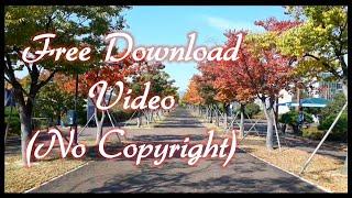 [무료영상] 단풍나무 와 낭만적인 가을길, 디지털 액자…