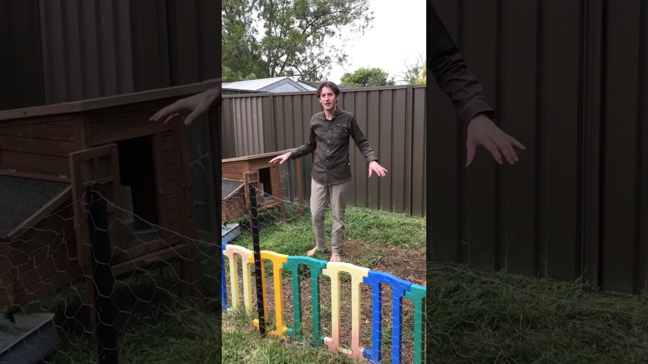 advice for keeping chickens in a small backyard youtube