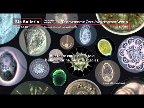Science Bulletins: Discovering the Ocean's Microscopic World