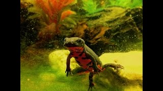 How To Setup A Chinese Fire Belly Newt Tank