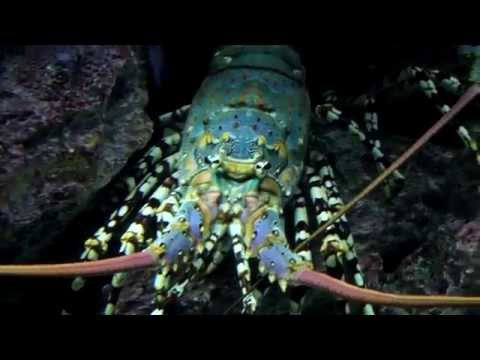 Life in Okinawa: Churaumi Aquarium