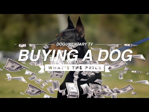 HOW MUCH SHOULD YOU PAY FOR A DOG?!!!