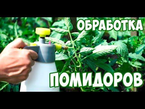 Чем обработать помидоры