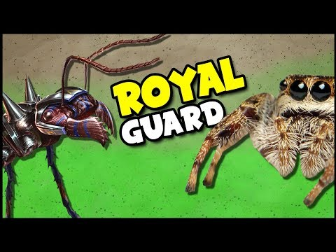HUGE Royal Guard Ants vs TIGER Beetles & Giant WOLF Spiders! (Empires of the Undergrowth Gameplay)