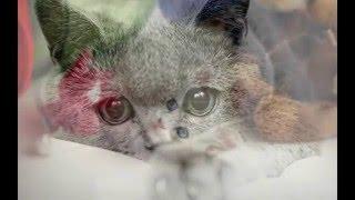 Красивые кошки котята ютуб видео с картинок под музыку