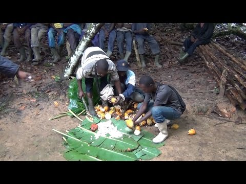 Jason Clay: The future of cocoa farming