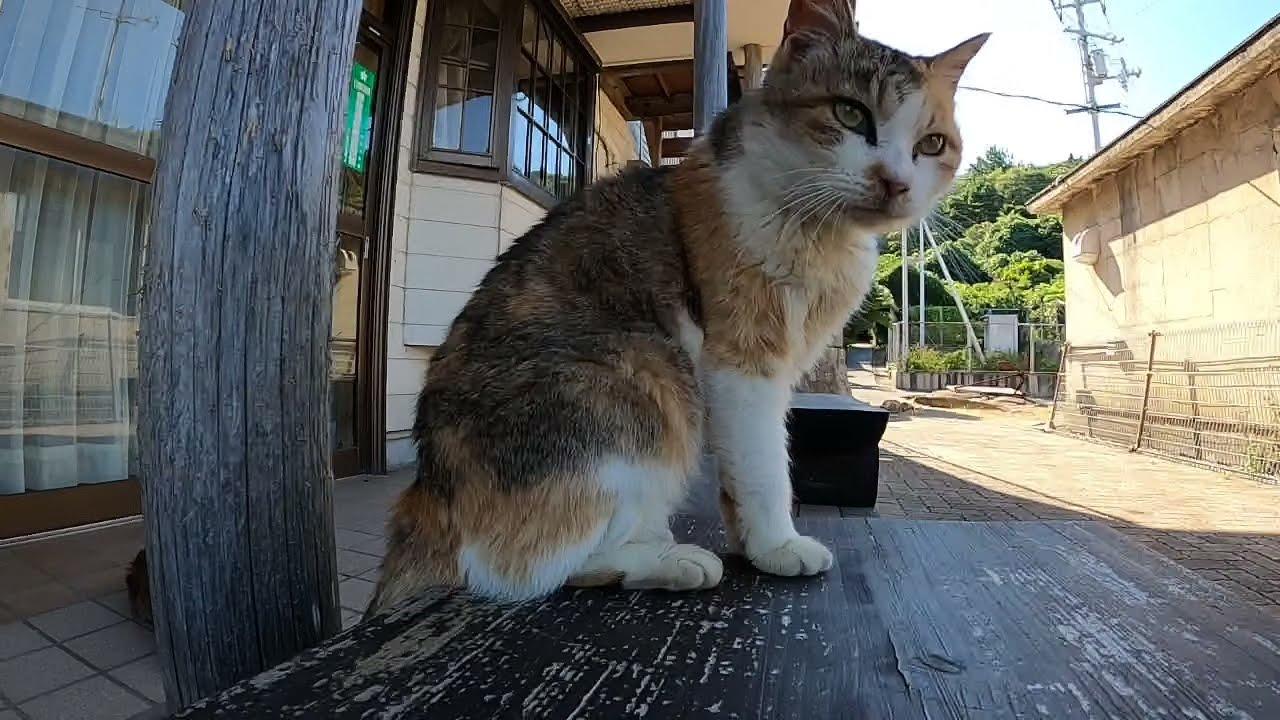 感動猫動画 のライブ配信