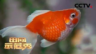 《田间示范秀》 20201228 精挑细管出好鱼|CCTV农业 - YouTube