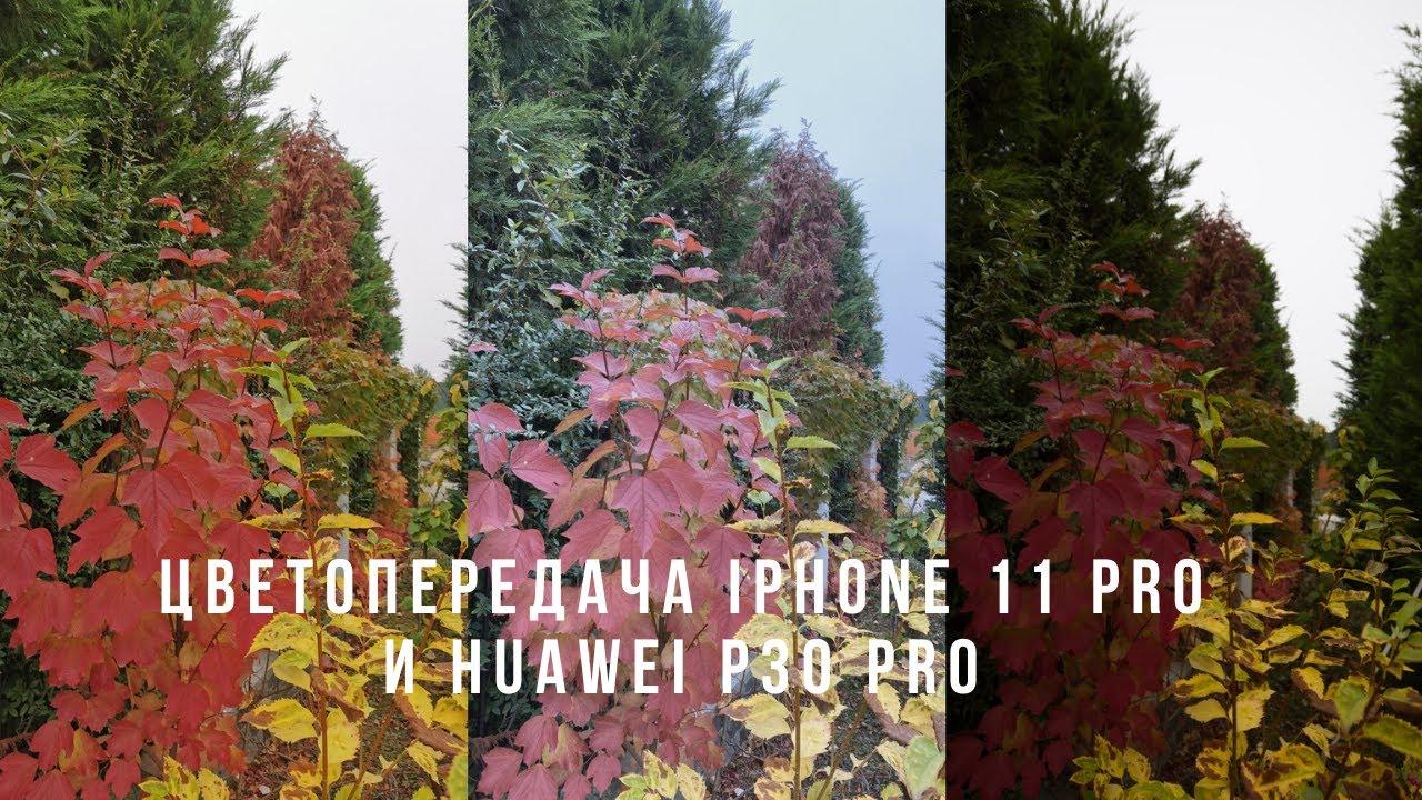 Цветопередача — iPhone 11 Pro, Huawei P30 Pro и эталон