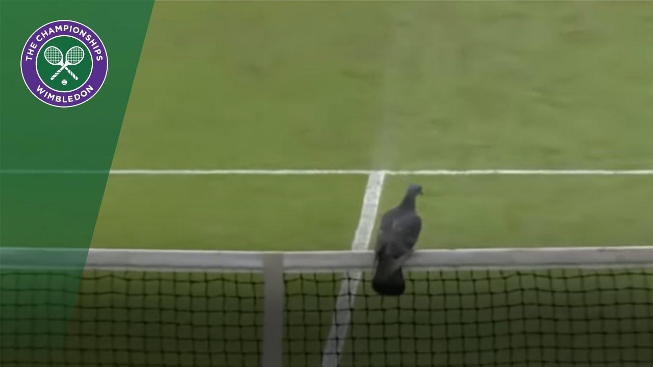 """Результат пошуку зображень за запитом """"Вітання Wimbledon"""""""