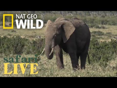 Safari Live - Day 28 | Nat Geo WILD