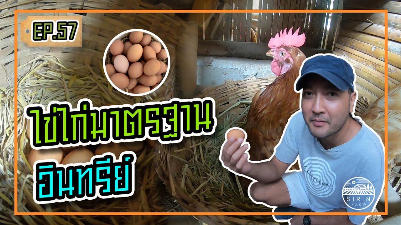 ไข่ไก่มาตรฐานอินทรีย์ - [สิรินทร์ฟาร์ม] EP.57