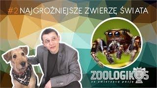 Najgroźniejsze zwierzę świata - cites / ZOOlogikus #02