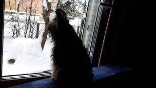 Соседская собака мотает нервы  Марусе.