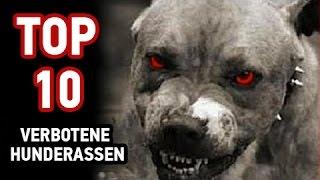 Top 10 Verbotene Hunderassen