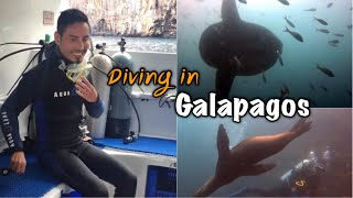 Diving in Galapagos ดำน้ำที่กาลาปากอส Part 4