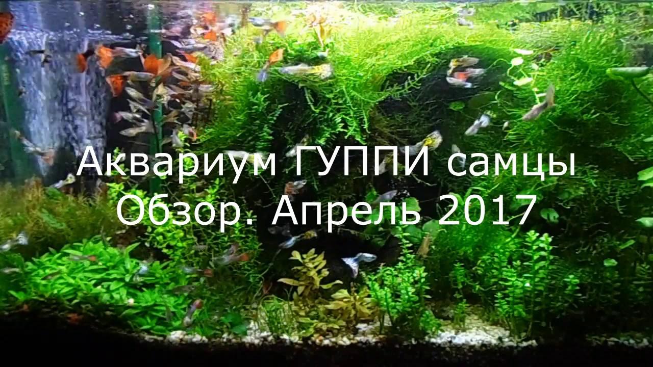 Креветки в аквариуме содержание с рыбами! Креветки аквариумные .