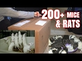 Unboxing HUNDREDS of Mice and Rats (GONE WRONG)