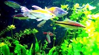Прекрасные рыбки и красивый аквариум(http://www.youtube.com/watch?v=8xly0-3ifl8 Аквариумистика. Аквариум. Аквариумные рыбки. Красивый аквариум, прекрасные рыбки..., 2015-07-18T10:44:42.000Z)