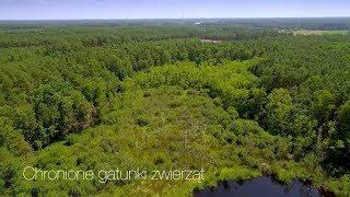 Przyroda pilskich lasów - odcinek 2 - Chronione gatunki zwierząt