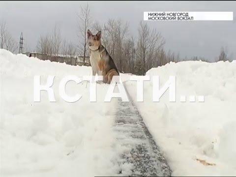 Смотреть Хатико по-нижегородски - случайно выпрыгнувший из электрички пес, вторую неделю ждет хозяина онлайн