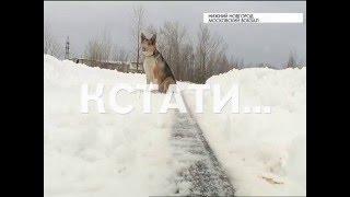 Хатико по-нижегородски - случайно выпрыгнувший из электрички пес, вторую неделю ждет хозяина(, 2016-02-04T15:32:56.000Z)