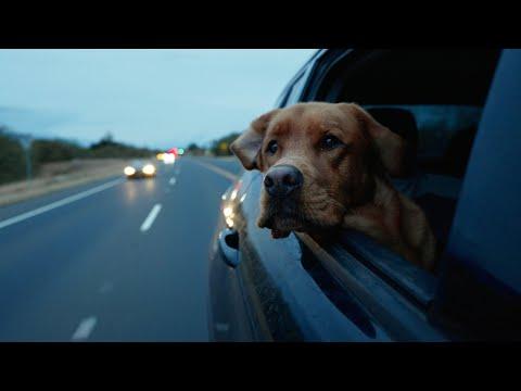 a Portrait of My Dog on Her Birthday - Sony FX3